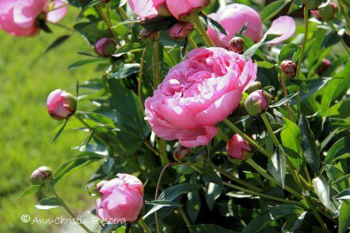 Blomstertid